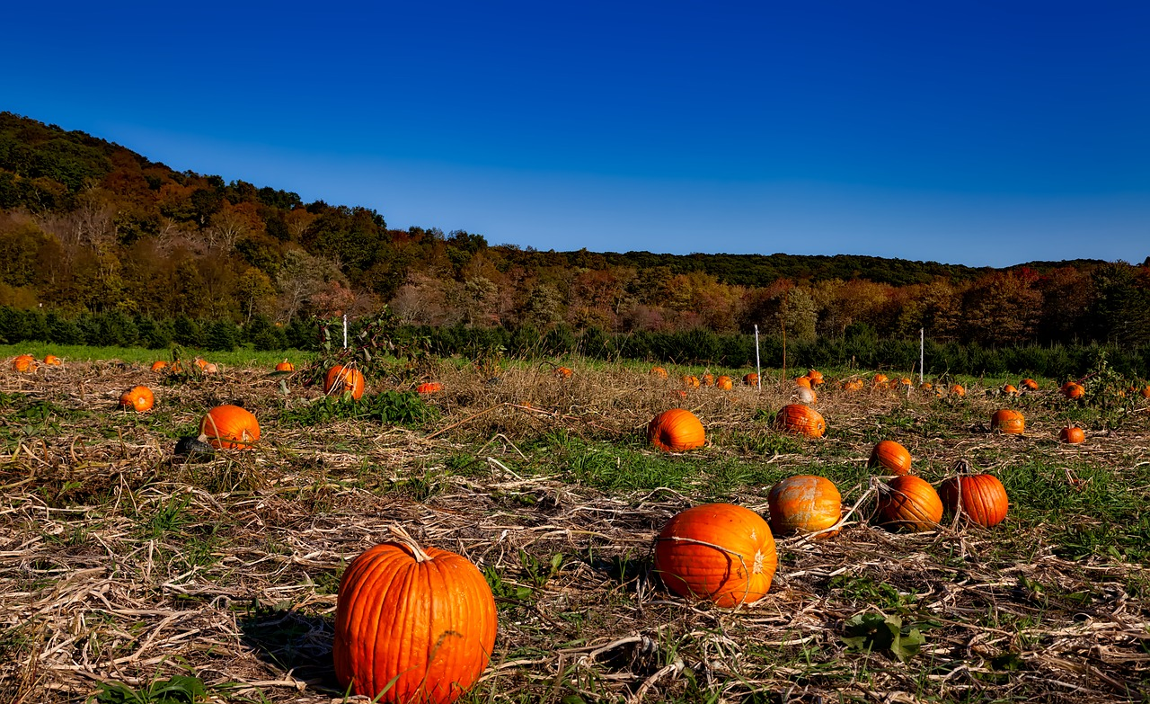 Pumpkin on list of fun fall activities to do with kids!