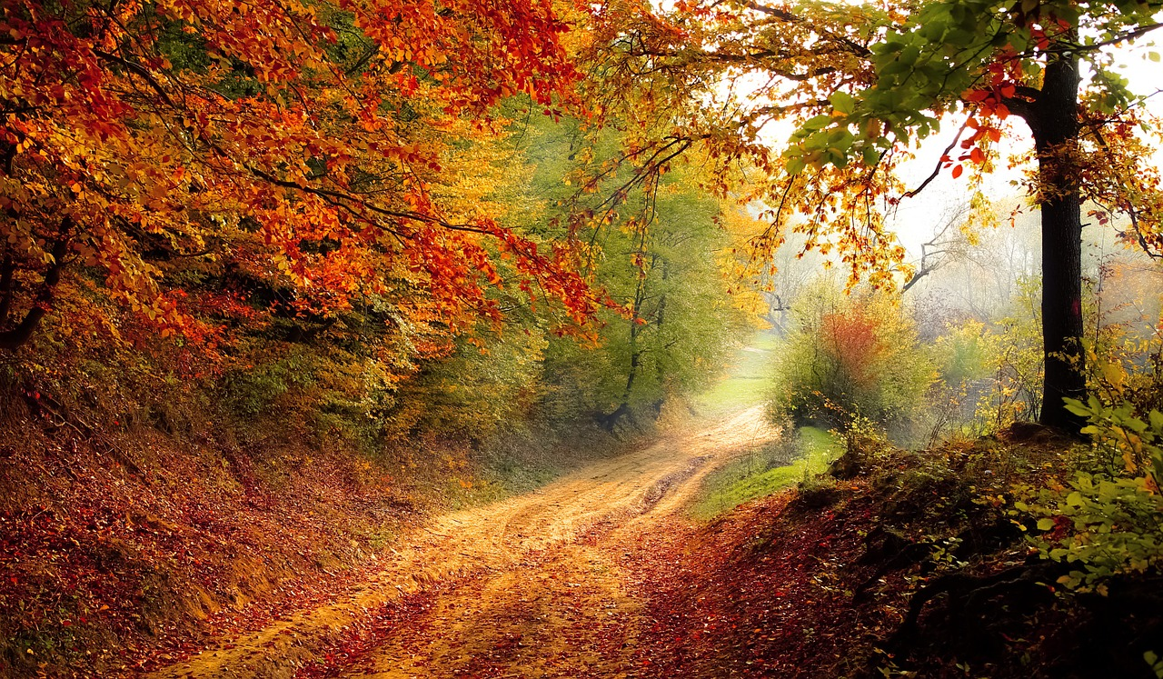 road with fall leaves on list of fall activities to do with kids